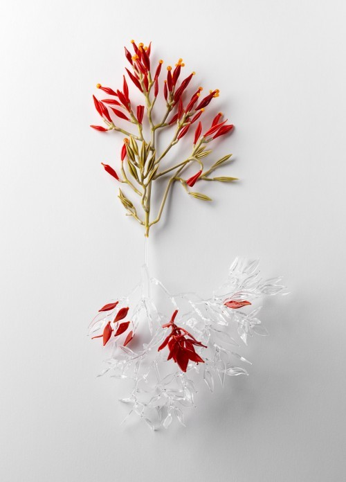 jess dare - conceptual flowering plant series 3 (photo by Grant Hancock)