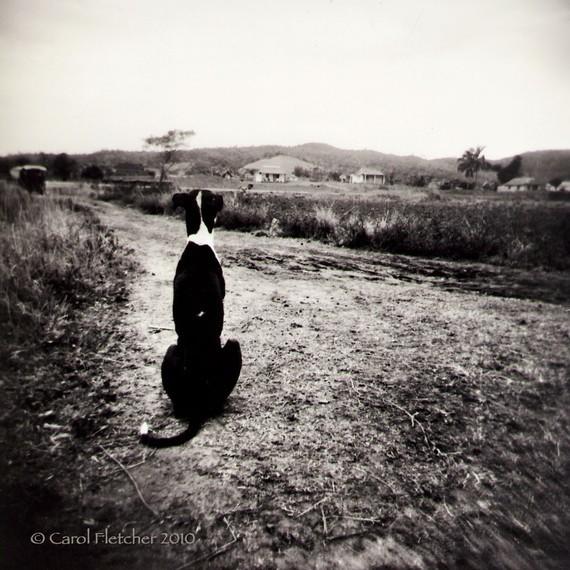 carol fletcher - vinales dog