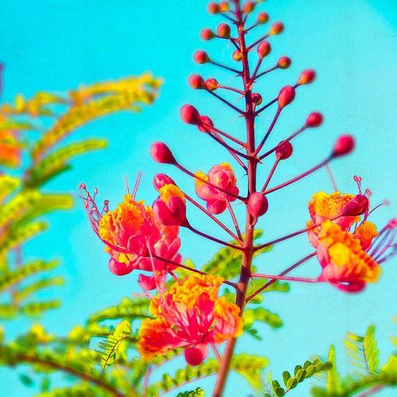 kaleidoscope - tropical neon flowers