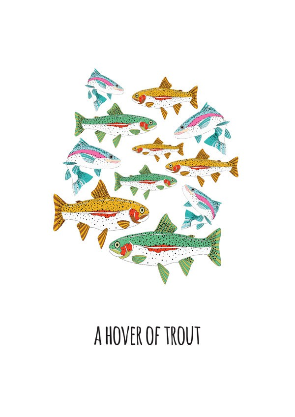 jen skelly - hover of trout