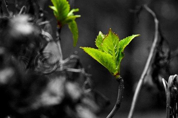 photogrunt - early spring