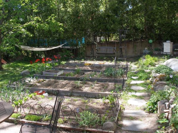 ruchika's garden outside her studio