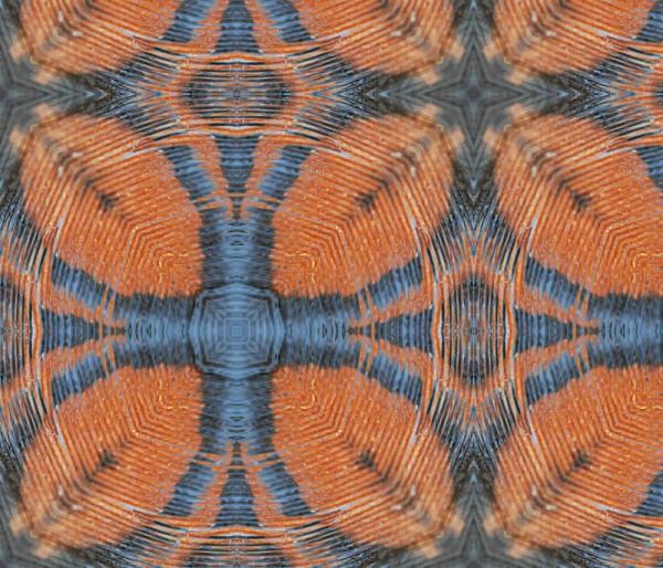 feather rishi - golden ripple