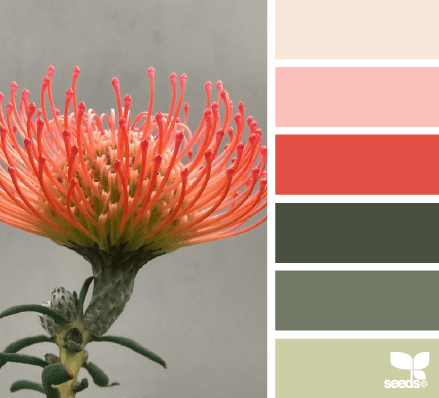 design seeds - flora hues