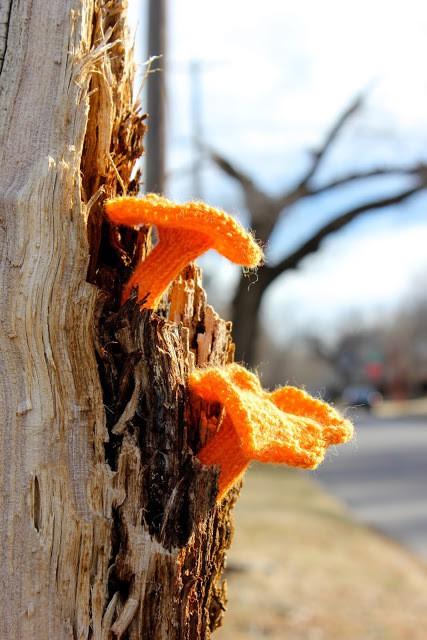 leigh martin - 52 forms of fungi - jackolantern