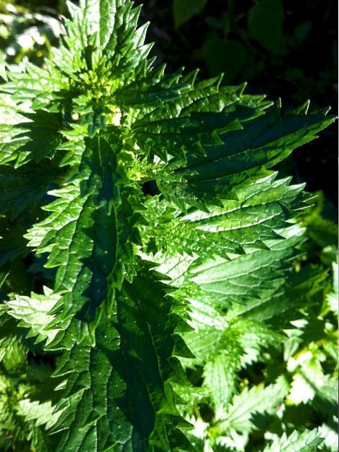 james vickers - nettle risotto
