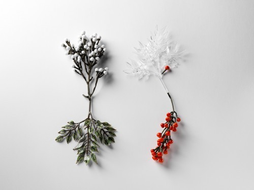 jess dare - conceptual flowering plant series 2 (photo by Grant Hancock)