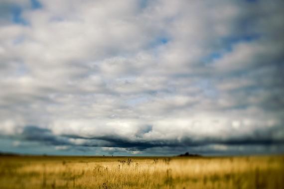 kim hayes - golden field