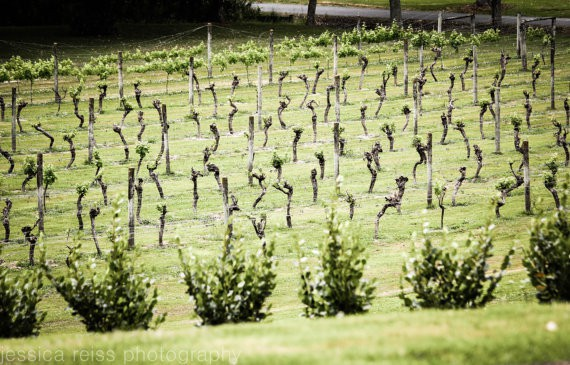 jessica reiss - vineyard - new zealand