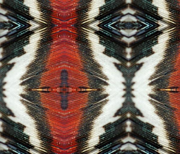 feather rishi - thor