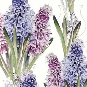 laura mysak - hyacinth
